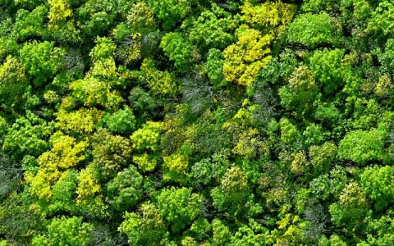 Even lush forest canopies could became effectively transparent with a future generation of light detection and ranging (LiDAR) technologies. Source: Shutterstock/DARPA
