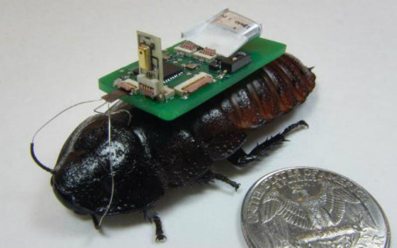 Biobots detect and track sounds for search and rescue.