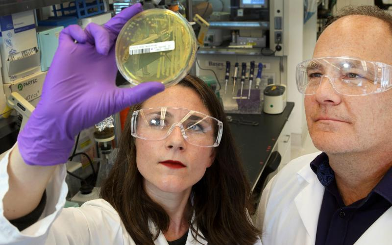 Sandia National Laboratories researchers Amanda Kohler and Ken Sale study the bacteria they used to produce LigM. Photo by Dino Vournas