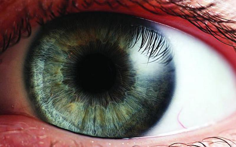 Increased use of iris recognition has spawned a host of deceptive countermeasures. A new technique promises to detect these masking efforts. (Photo: Petr Novak, Wikipedia)