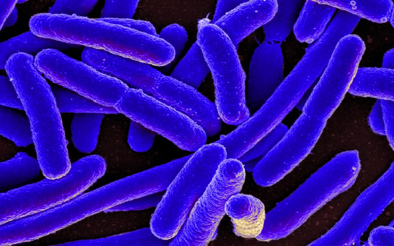 Encrypted synthetic DNA can be stored within common E. coli bacteria without affecting the bacteria, which can produce numerous copies of the data.
