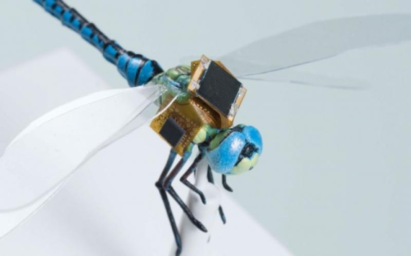 The various components of the so-called electronic backpack are designed to stimulate the dragonfly's flight control neurons.