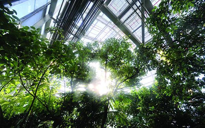 LASR's Tropical High Bay is a greenhouse that simulates a southeast Asian tropical rain forest.