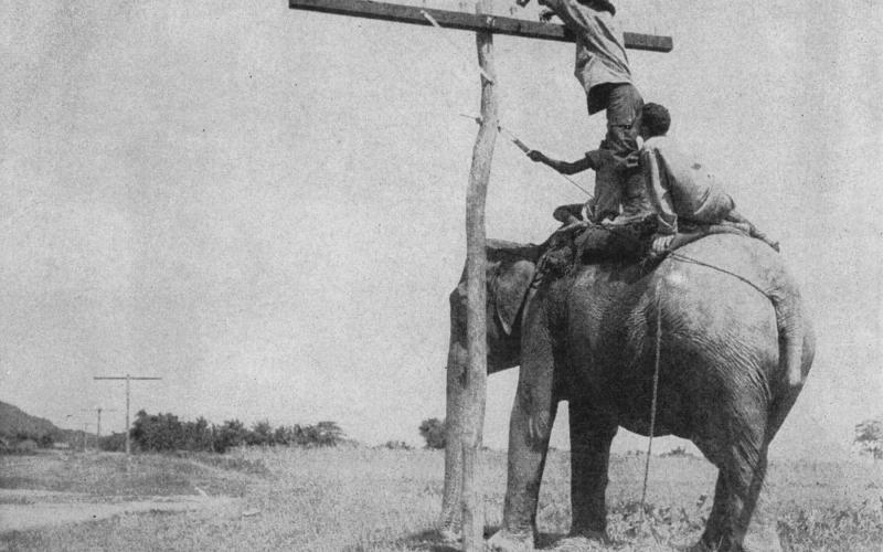 Innovation in challenging situations is a core competency of AFCEA and its members. In this photograph from the first issue of SIGNALS, September 1946, a member of a Signal construction group hangs a line using an elephant, an approach that enabled them to overcome the swamps in India.