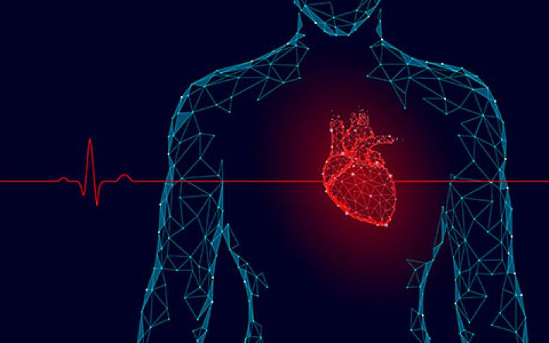 Sandia National Laboratories is pursuing a heartbeat-based technology for a security application. Credit: Shutterstock/LuckyStep