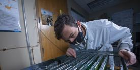 Sandia National Laboratories researcher J. Darby Smith examines computer boards containing artificial neurons Intel Corp designed. (Photo by Regina Valenzuela)