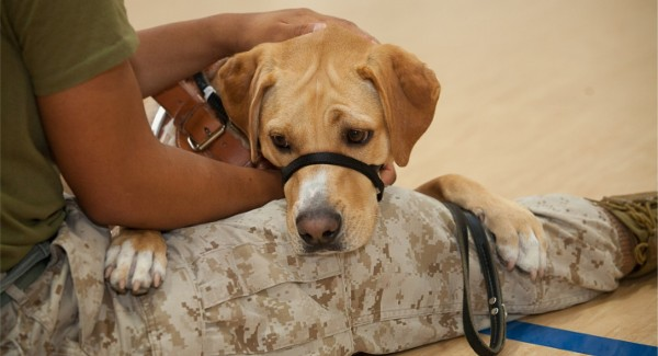 Proceeds from the chapter�s July fundraiser went to Canines for Veterans, a national program providing disabled veterans with quality trained service dogs.